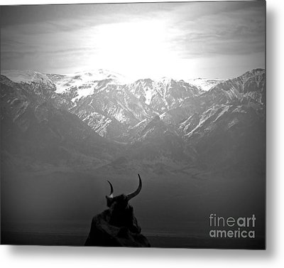 The Last Wild One Metal Print by Megan Chambers