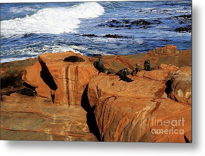 The Lazy Lounging Seals Metal Print