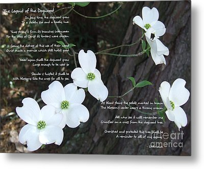 The Legend Of The Dogwood Metal Print by Andrea Anderegg