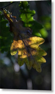 Metal Print featuring the photograph The Light Fell Softly by Odd Jeppesen