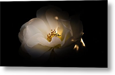 The Light Of Life Metal Print by Loriental Photography