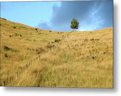 The Lines The Tree And The Hill Metal Print by Yoel Koskas