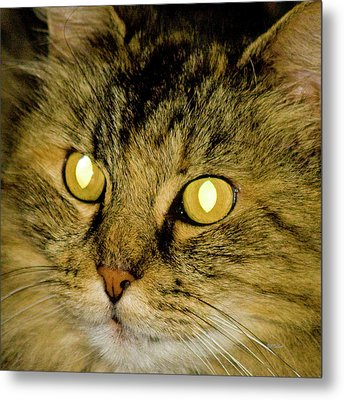 The Lion Cat Metal Print