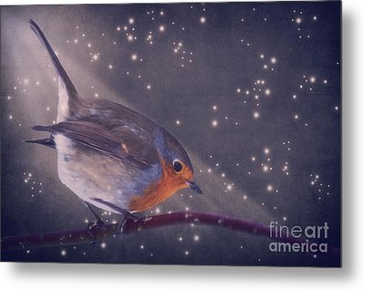 The Little Robin At The Night Metal Print by Angela Doelling AD DESIGN Photo and PhotoArt