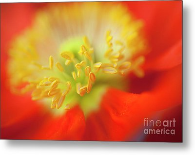 The Little Things Metal Print by Ronald Hoggard