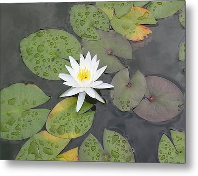 The Lone Bloom Metal Print by Jodi Marze Kass