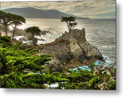 The Lone Cypress Carmel California Metal Print by Connie Cooper-Edwards