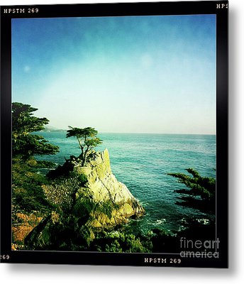 The Lone Cypress Metal Print by Nina Prommer