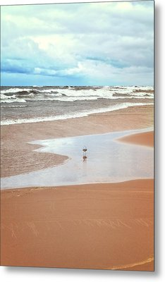 The Lone Gull Metal Print by Michelle Calkins