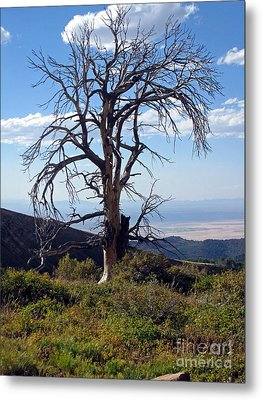 Metal Print featuring the photograph The Lone Tree by Juls Adams
