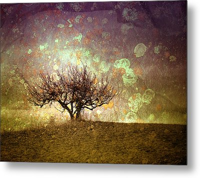 The Lone Tree Metal Print by Tara Turner