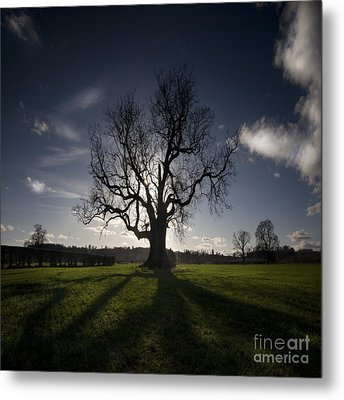 The Lonely Tree Metal Print by Angel  Tarantella