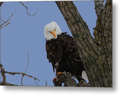 The Look Metal Print by Dave Clark
