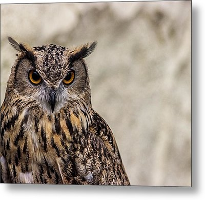 The Look Of An Owl Metal Print by Martin Newman