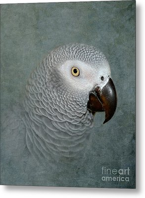 The Love Of A Gray Metal Print