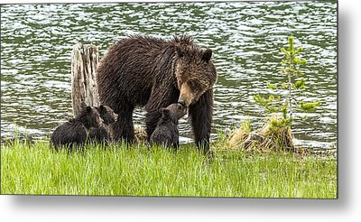 The Love Of Mama Bear Metal Print by Yeates Photography