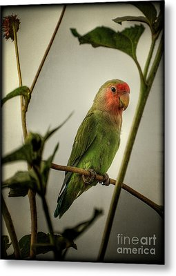 The Lovebird  Metal Print by Saija  Lehtonen