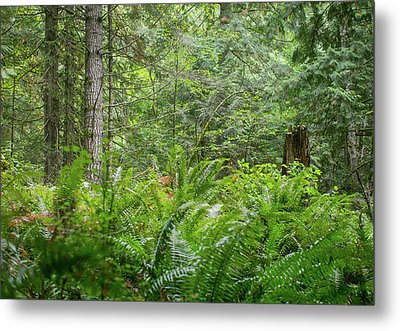 The Lush Forest Metal Print