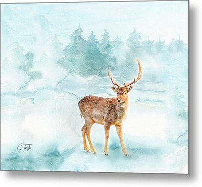 The Magic Of Winter  Metal Print by Colleen Taylor