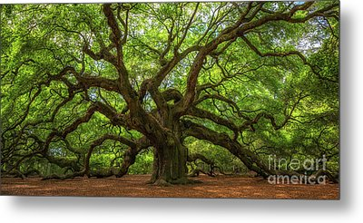 The Magical Angel Oak Tree Panorama  Metal Print by Michael Ver Sprill