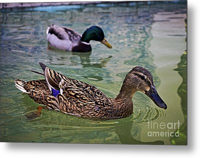 Metal Print featuring the photograph The Mallard Pair by Mary Machare