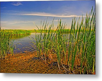 The Marshes Of Brazoria Metal Print