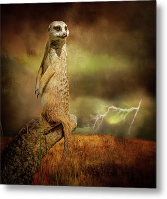 The Meerkat And The Storm Metal Print by Margaret Goodwin