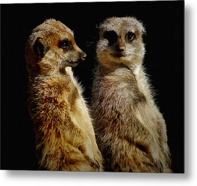 The Meerkats Metal Print