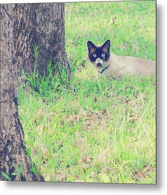 The Mighty Hunter Metal Print by Amy Tyler