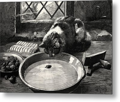 The Milky Way Or A Cat Looking At A Mouse Metal Print by English School