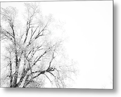 Metal Print featuring the photograph The Minimal Tree by Joel Witmeyer