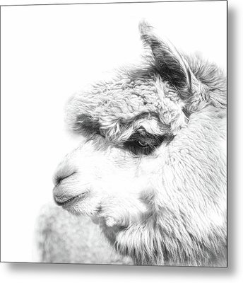 Metal Print featuring the photograph The Misty by Robin-Lee Vieira