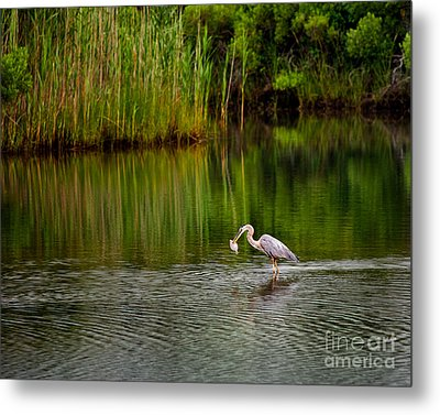 The Morning Catch Metal Print
