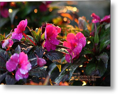 Metal Print featuring the photograph The Morning Flower by Paul SEQUENCE Ferguson             sequence dot net