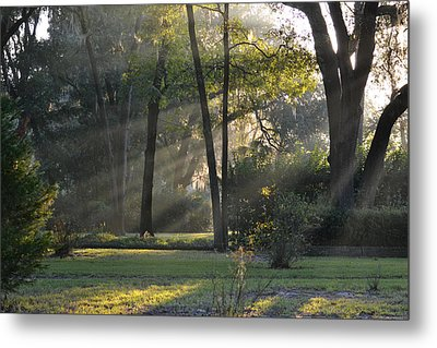 The Morning Sunlight Comes Shining Through Metal Print