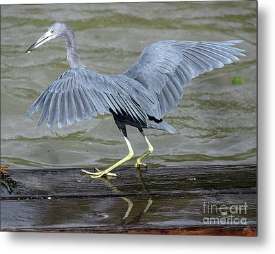 The Morsel After Scooch Metal Print
