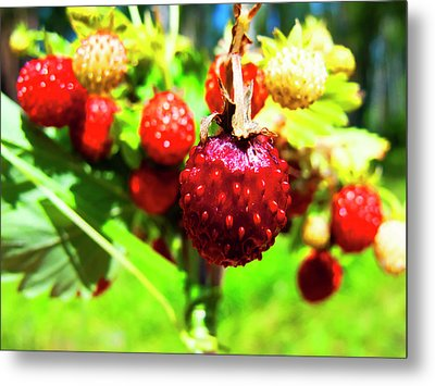 The Most Delicious In The Forest Metal Print by Nat Air Craft