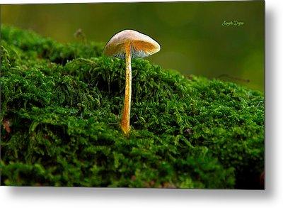 The Mushroom 15 - Pa Metal Print by Leonardo Digenio