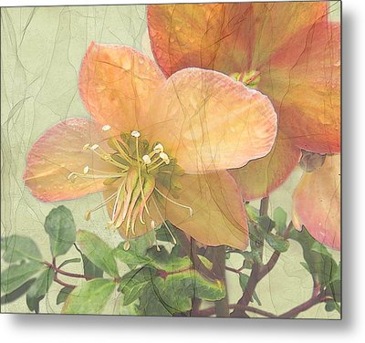 The Mystical Energy Of Nature Metal Print