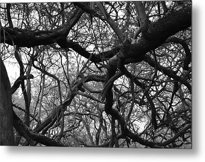 The Neural Net Metal Print by Tracey Myers