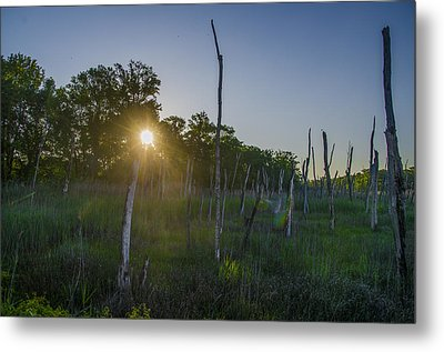 The New Jersey Pine Barrens Metal Print