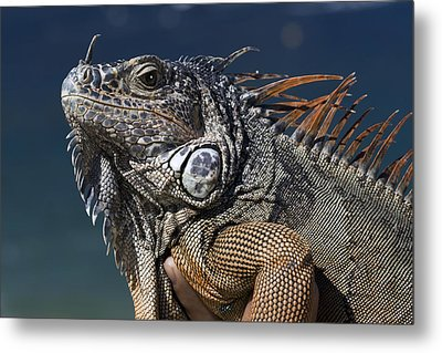 The Night Of The Iguana Metal Print by Carl Purcell