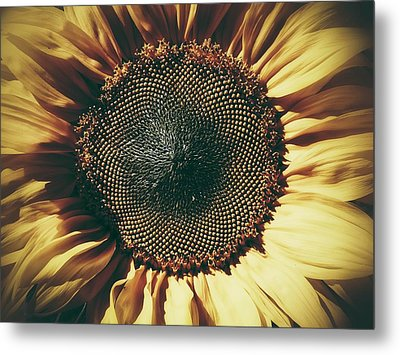 The Not So Sunny Sunflower Metal Print by Karen Stahlros