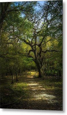 The Oak Trail Metal Print by Marvin Spates