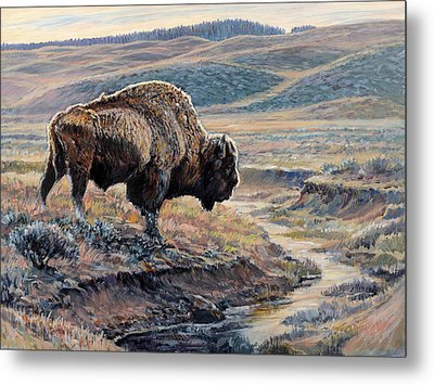 The Old Bull Metal Print by Steve Spencer