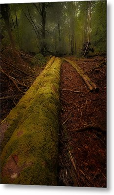 The Old Mossy Trunk Metal Print
