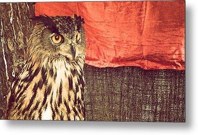 The Owl Metal Print by Pedro Venancio