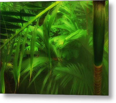 Metal Print featuring the photograph The Palm Forest  by Connie Handscomb