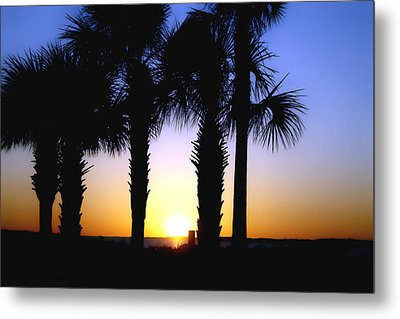 The Palms At Sunset Metal Print by Debra Forand