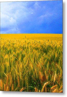 The Palouse Wheat Fields Metal Print